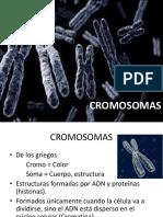 Cromosomas, Ciclo Celular, Mitosis, Meiosis