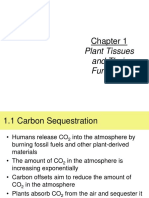Chapter 1 Plant Tissues and Their Function