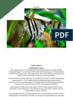 Ikan hias termahal di Indonesia beserta nama latinnya