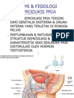 ANFIS Repro Pria & Respirasi, IDK.pdf