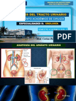Urología - Clase 4 - Itu (2)