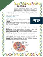 LA CELULAAAAA.docx
