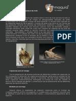 Catálogo-caperuzas.pdf