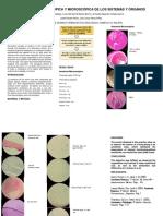 Anatomía Macroscópica y Miscroscópica de Los Sistemas y Órganos