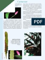Familia Cactaceae de Ducke