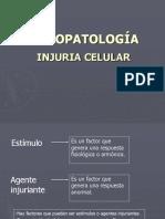 2.- Fisiopatologia de La Celula Bcm i (1)