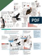 INFOGRAFICO ESPECIES AMEACADAS.pdf