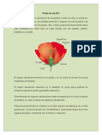 PartesDeUnaFlor (1).doc