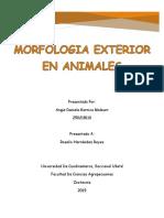 MORFOLOGIA EXTERIORES.docx