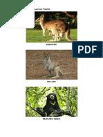 Persebaran Fauna Di Indonesia.docx