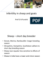 Infertility in Sheep and Goats