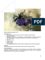 46 SP Compendio de Mineralogia