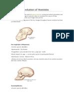Biological Evolution of Hominins