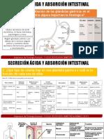 FISIOLOGIA EXPO PREG 1 Y 2 .pptx
