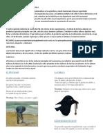 ACTIVIDADES ECONOMIAS DE GUATEMALA.docx