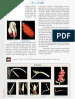 PFRD_1999_Araceae