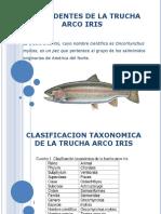 Presentacion de La Trucha Arco Iris