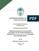 LUIS ALAYA -TESIS.pdf