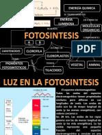 Fotosintesis Celular