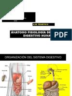 Sistema Digestivo Sétimos 2009