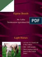 ANSCI Horse.ppt
