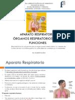 1 Aparato respiratorio.pdf