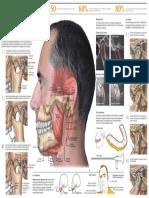 2010_problemas_articulacion_temporomandibular.pdf