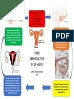 ciclo reproductivo