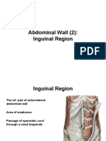 Anatomy, Lecture 9, Abdominal Wall (2)