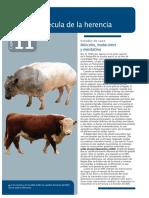 ADN la molécula de la herencia (Cap.11 Audesirk).PDF