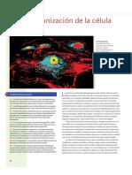 Organización de las células (Cap.4 Solomon).pdf