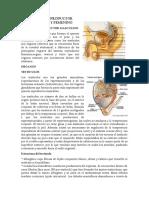 Histologia-Aparato-Reproductor-Masculino-y-Femenino.docx