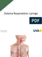 Sistema Respiratório Laringe
