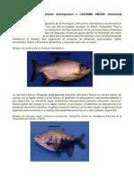 ESPECIES PISCICULTURA.docx