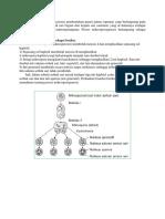 Mikrosporogenesis.docx