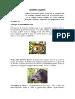 REGIÓN AMAZONÍA.docx