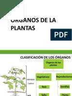 Órganos de la planta