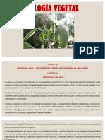 Tema 4 Función Del Agua y Los Diferentes Papeles Que Desempeña en Las Plantas