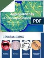 Aggregatibacter
