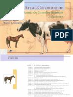 Atlas Colorido Anatomia de Grandes Animais.pdf