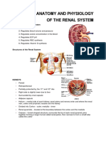 ANATOMY-AND-PHYSIOLOGY-RENAL.docx