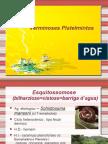 Biologia PPT - Aula 2 - Verminoses Platelmintos