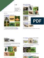 Pests of Fruit Crops: A Colour Handbook