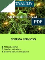 2. Médula Espinal