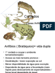 Biologia PPT - Aula 8 - Anfíbios