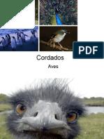 Biologia PPT - Aula 10 - Aves