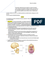 Lab Cráneo