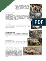 Perro salvaje africano.docx