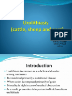 Urolithiasis in cattle, sheep and goat.pptx