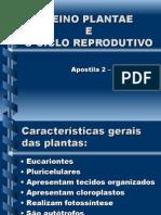 Biologia PPT - Reino Plantae
